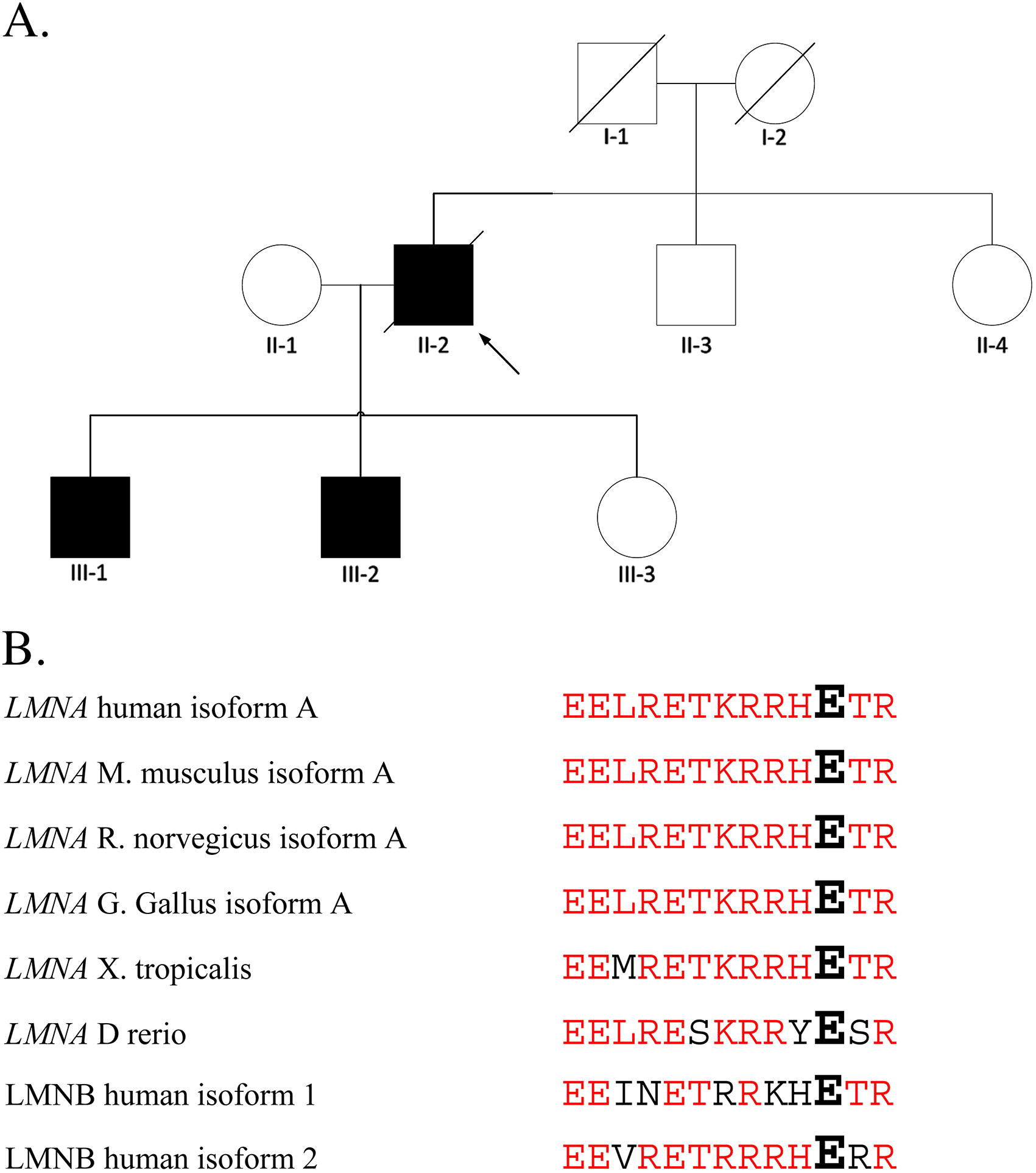 A novel lamin ac mutation in a dutch family with premature view hi res biocorpaavc