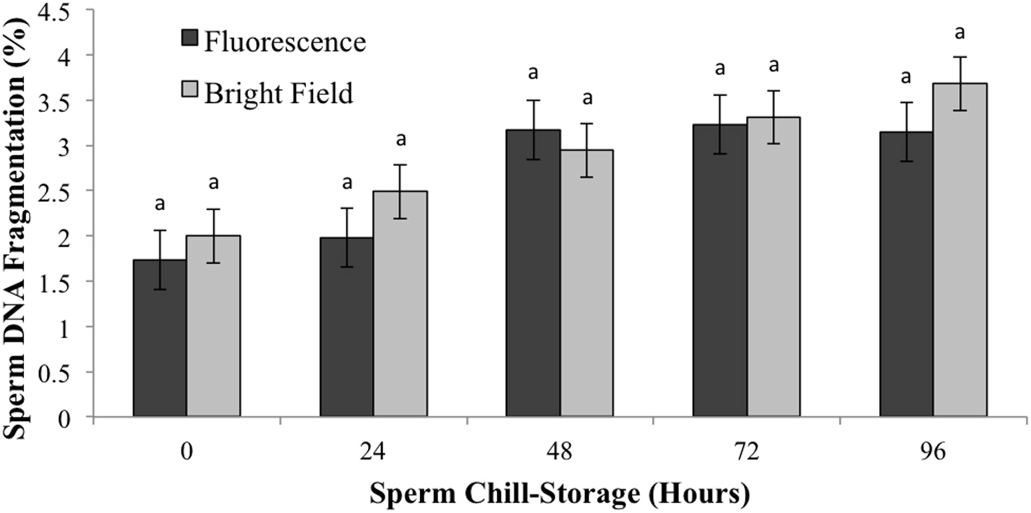 Dna integrity of canine spermatozoa during chill storage assessed by hi res geenschuldenfo Gallery