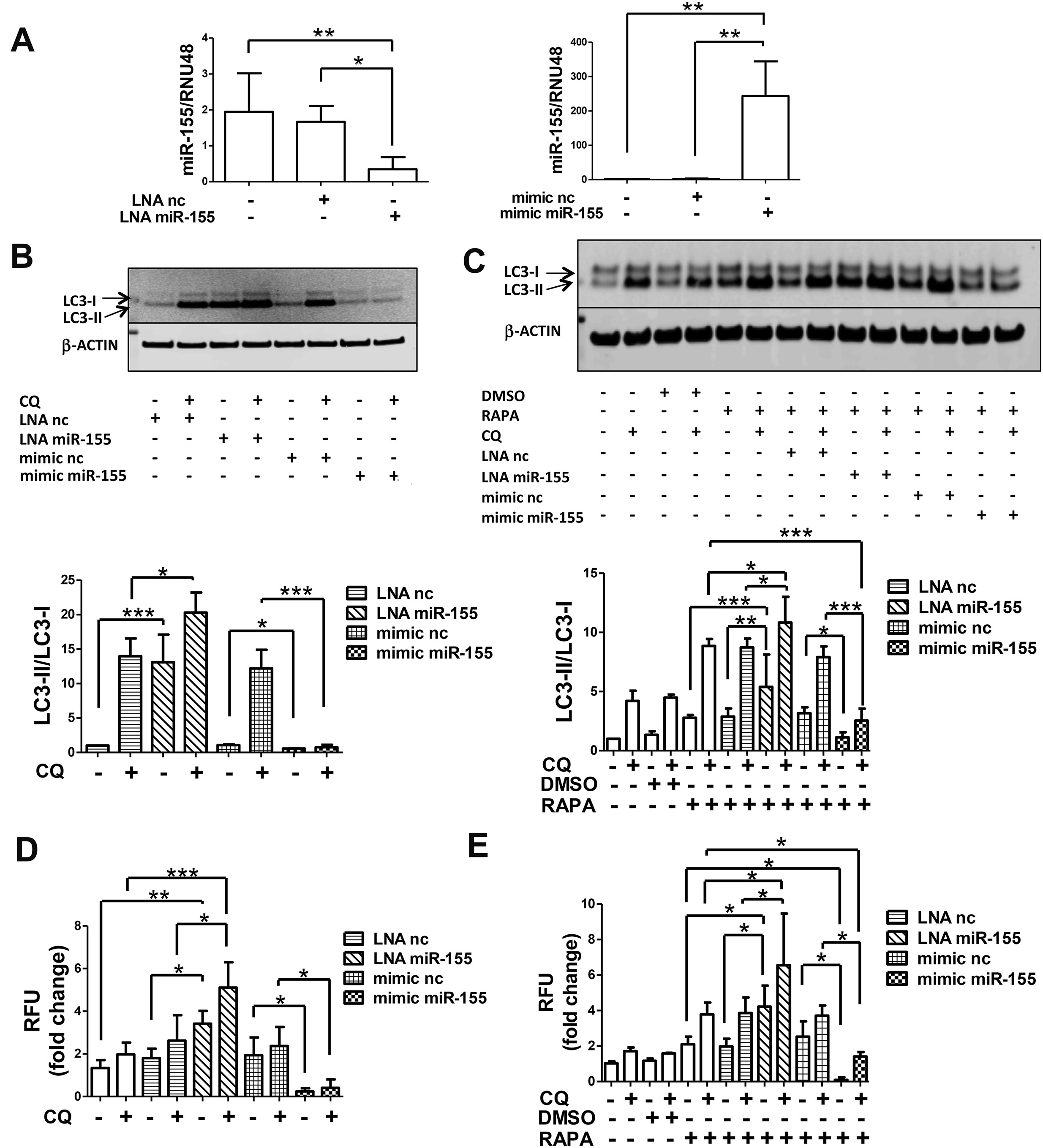 MicroRNA-155 suppresses autophagy in chondrocytes by modulating ...