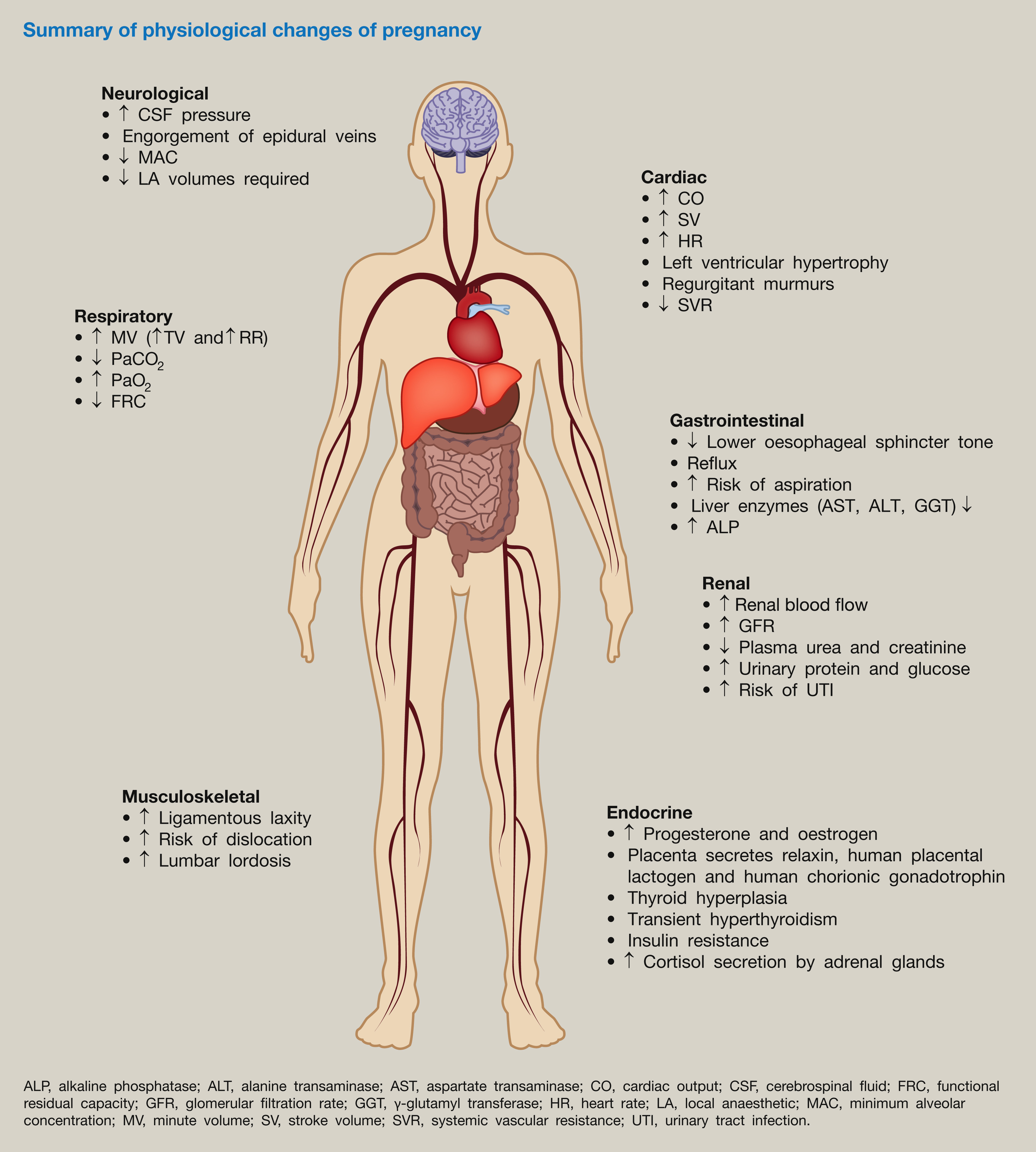 Physiology of pregnancy - Anaesthesia & Intensive Care Medicine