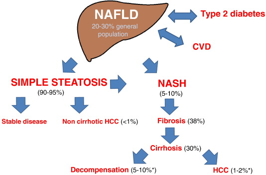 The multiple hit pathogenesis of non alcoholic fatty liver disease 1fig ccuart Gallery