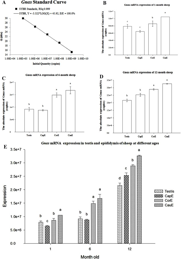 Expression and localization of guanine nucleotide binding protein fig 2 ccuart Gallery