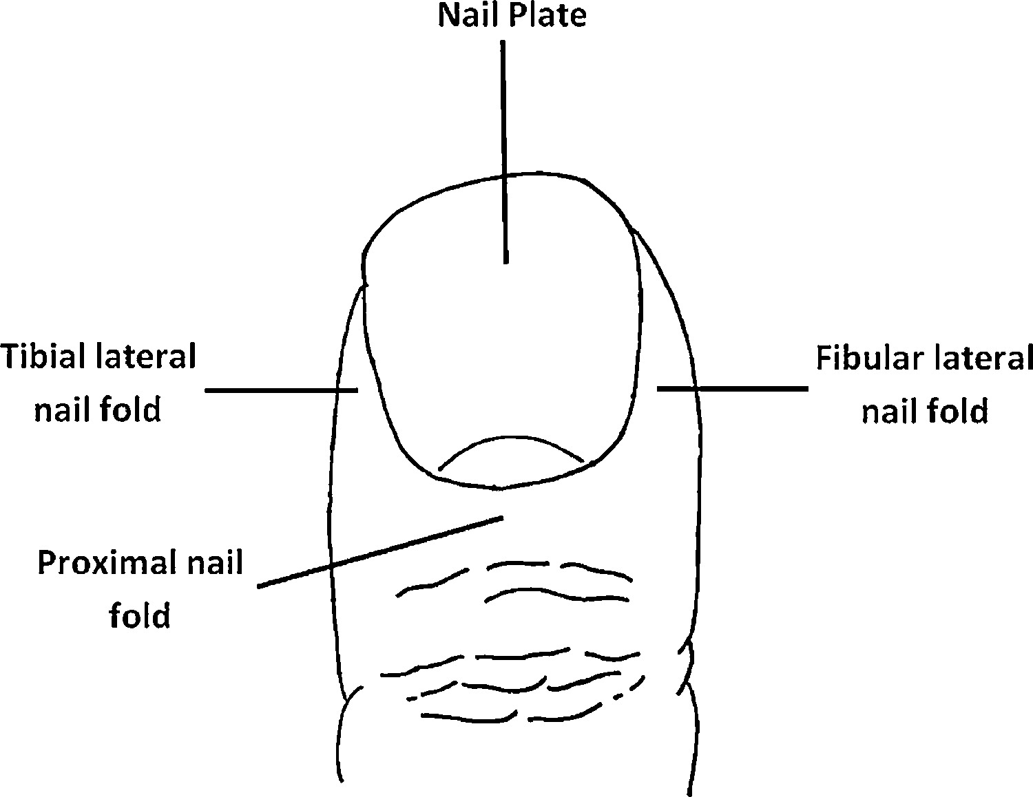 Toenail paronychia foot and ankle surgery view hi res pooptronica
