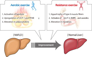 Aerobic vs resistance exercise in non alcoholic fatty liver disease figure thumbnail fx1 ccuart Gallery